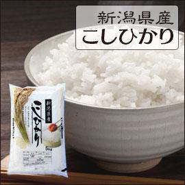 新潟県 白米 1等米 こしひかり 10kg