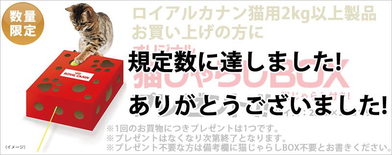ロイヤルカナン猫じゃらしBOXプレゼントキャンペーン終了のお知らせ