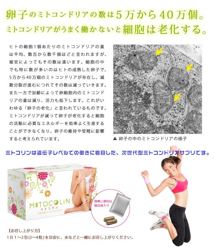 ミトコリンー卵子のミトコンドリア、妊娠の活力