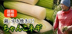 すき焼きねぎに最適!和歌山で自然の恵みを存分に浴びたちゃんこ  葱