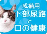 アイムス 猫 下部尿路とお口のケア