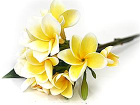 造花 フェイクフラワー プルメリア(枝葉付)イエロー
