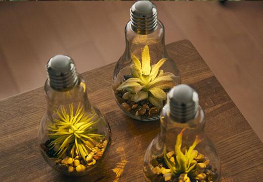 電球型テラリウム