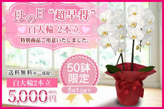 胡蝶蘭5000円