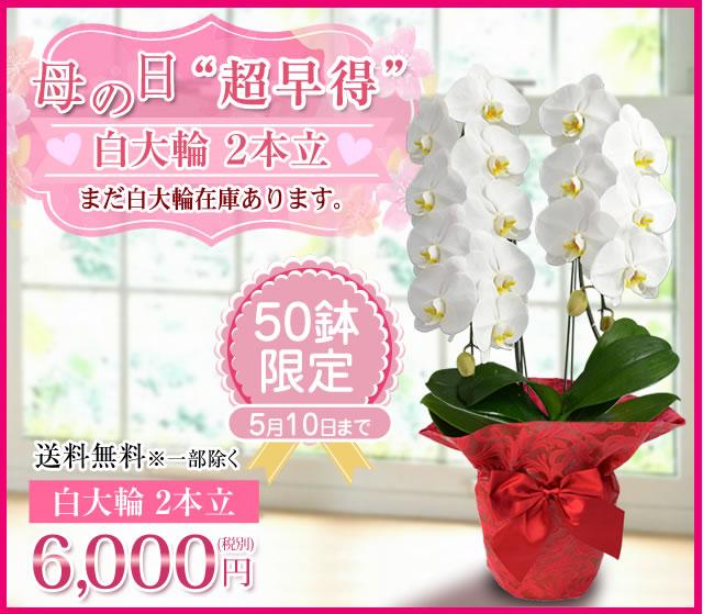胡蝶蘭6000円