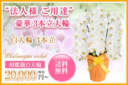 胡蝶蘭2万円