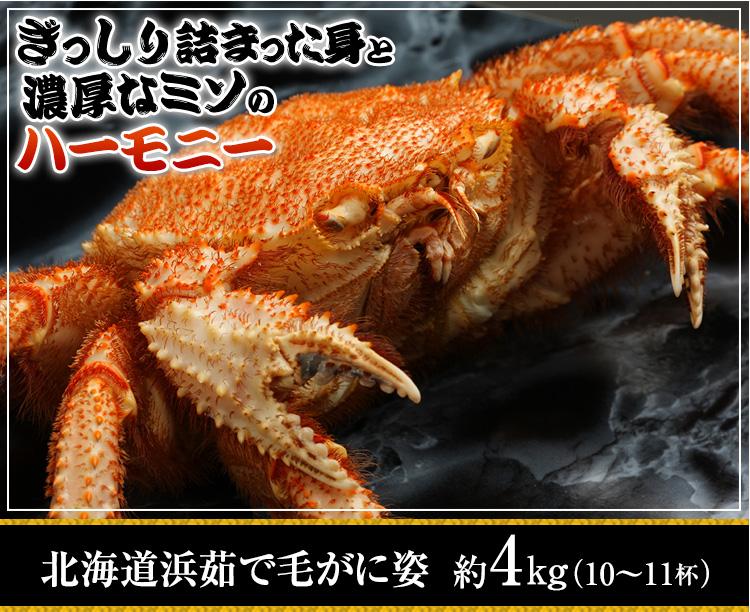 ぎっしり詰まった身と濃厚なミソのハーモニー 北海道浜茹で毛蟹姿 約4kg(11杯)