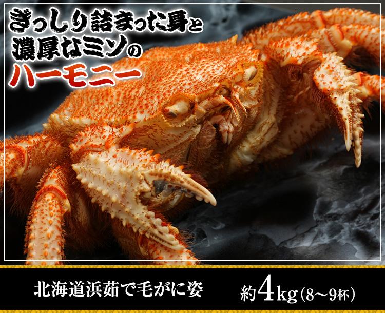 ぎっしり詰まった身と濃厚なミソのハーモニー 北海道浜茹で毛がに姿 約4kg(8〜9杯)