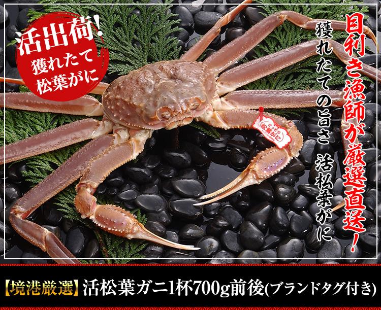 【境港厳選】活松葉ガニ1杯700g前後(ブランドタグ付き)