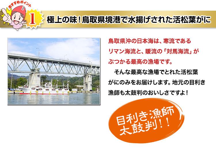 極上の味!鳥取県境港で水揚げされた活松葉がに