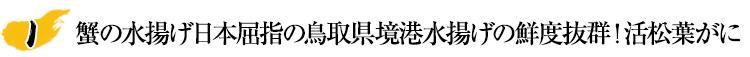 蟹の水揚げ日本屈指の鳥取県境港水揚げの鮮度抜群!活松葉がに