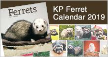 KP(キンペックス) 2020 フェレットカレンダー
