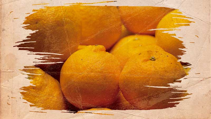 ふるさと21の柑橘