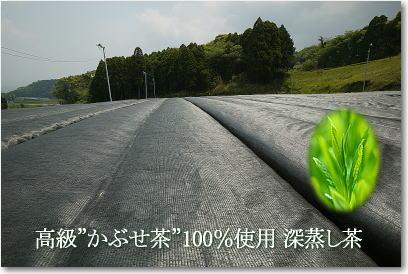 高級かぶせ茶100%使用