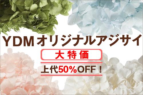 YDMオリジナルアジサイ大特価!