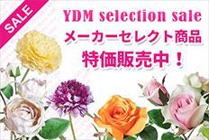 YDMセレクション特価販売中!