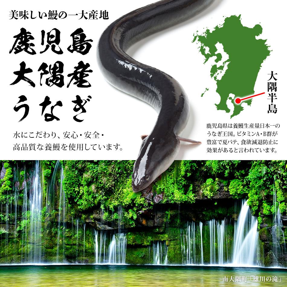 美しい鰻の一大産地鹿児島大隈産うなぎ