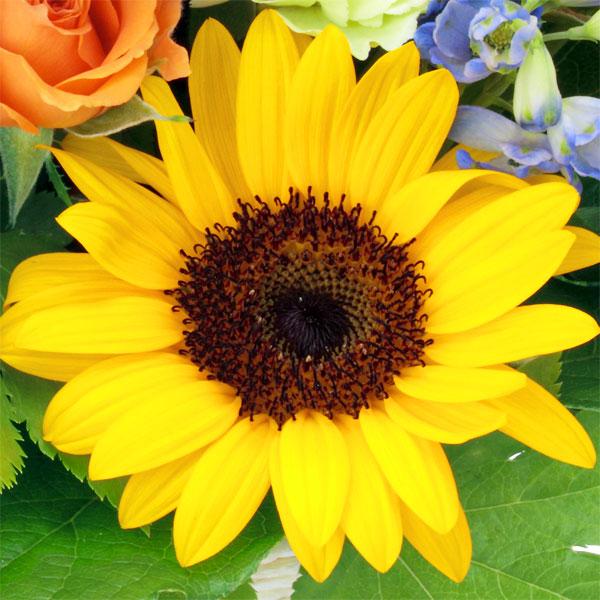 1:ひまわり|お父さんへの「憧れ」を表す花