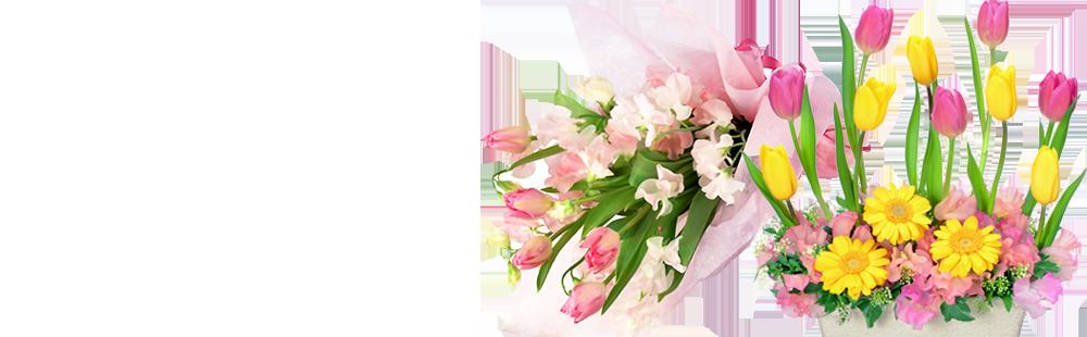 花キューピットのチューリップのプレゼント特集