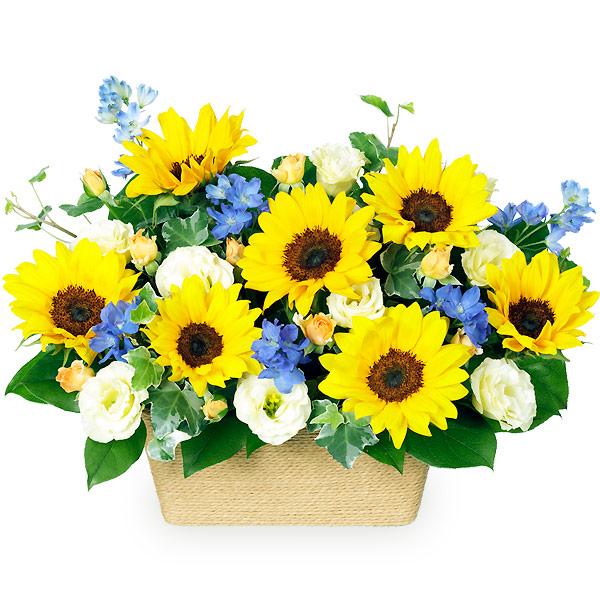 ひまわりのアレンジメント 511381 |花キューピットの2019父の日プレゼント特集