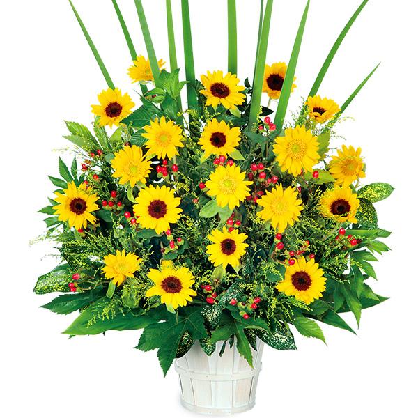 ひまわりの華やかアレンジメント 511384 |ひまわり特集特集:花キューピットおすすめフラワーギフト!