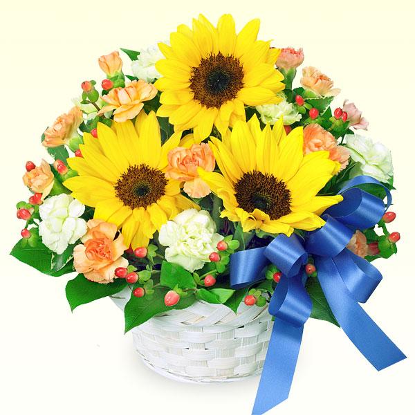 ひまわりとブルーリボンのアレンジメント 511390 |ひまわり特集特集:花キューピットおすすめフラワーギフト!