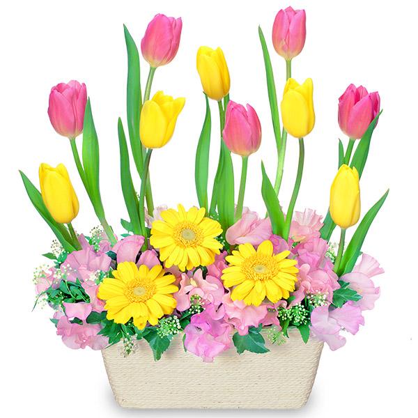 チューリップのガーデンアレンジメント |春のお祝い・イベントに!|春のお祝い特集 2019