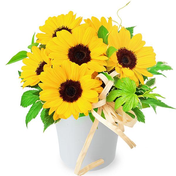 ひまわりのナチュラルアレンジメント 511989 |花キューピットの2019父の日プレゼント特集