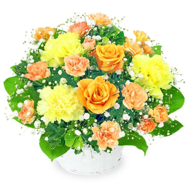 オレンジバラのアレンジメント 511999 |花キューピットの2019父の日プレゼント特集