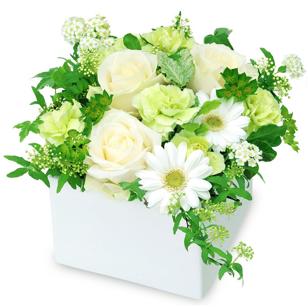 【秋の結婚記念日】白バラのキューブアレンジメント 512022 |花キューピットの秋の花贈りプレゼント特集2019
