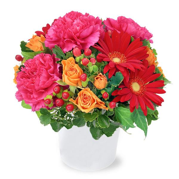 【秋の結婚記念日】赤ガーベラの鮮やかアレンジメント 512040 |花キューピットの秋の花贈りプレゼント特集2019