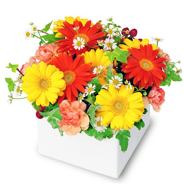 【秋の結婚記念日】2色ガーベラのキューブアレンジメント 512059 |花キューピットの秋の花贈りプレゼント特集2019
