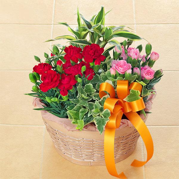 【母の日】カーネーションの寄せ鉢 521301 |花キューピットの母の日プレゼント特集2021