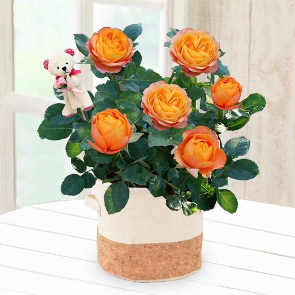 バラ ベビーロマンティカ(クマのピック付き) 711174 |花キューピットの2019母の日プレゼント特集
