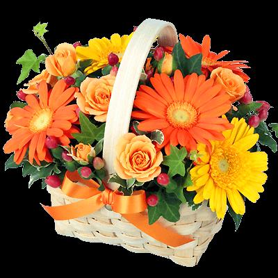 11月の誕生花(ガーベラ等)