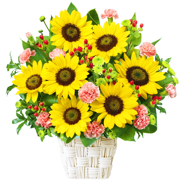 アレンジメント|ひまわり特集|花キューピットおすすめの季節のフラワーギフト