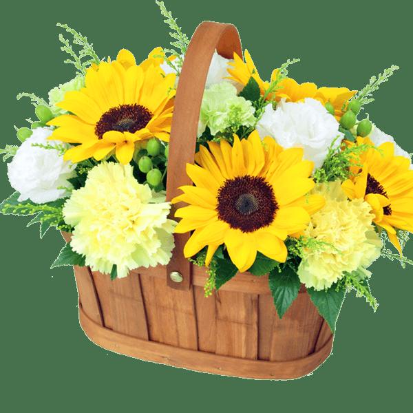 ひまわりのギフト|花キューピットの父の日におすすめ!人気のプレゼント特集 2020
