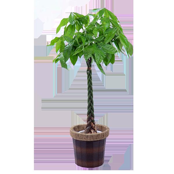 観葉植物 母の日 プレゼント・ギフト特集2021