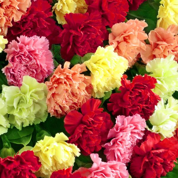 カラフルなカーネーションの花束|母の日プレゼント特集2019
