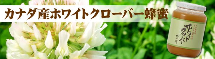 カナダ産ホワイトクローバー蜂蜜(はちみつ)