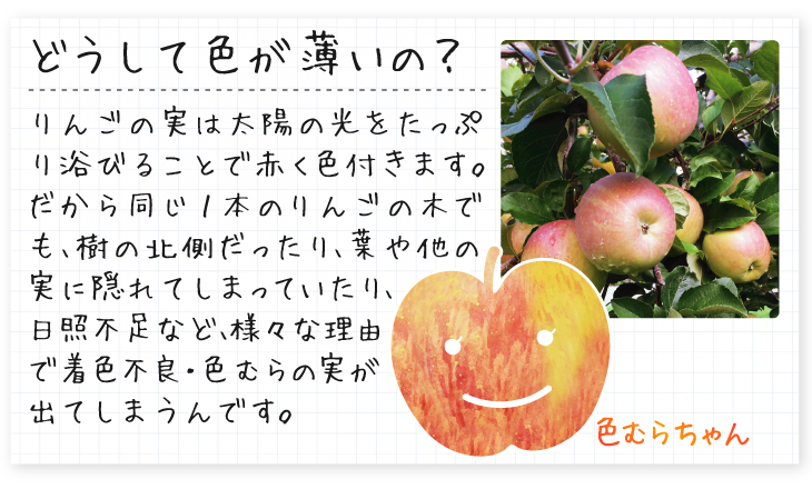 色むらふじ紹介01