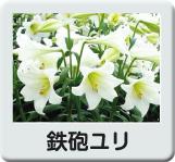 16n-minibnrtuliptanshoku.jpg (129×110)