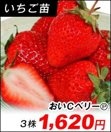 bnr_ichigo01.jpg (220×260)