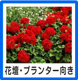 花壇・プランター向け