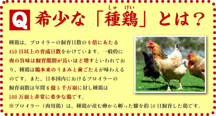 種鶏.jpg