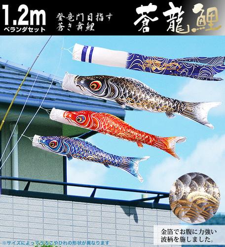 ベランダ用蒼龍鯉1.2m