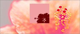 FLOWER RED - フラワーレッド