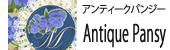 アンティークパンジー