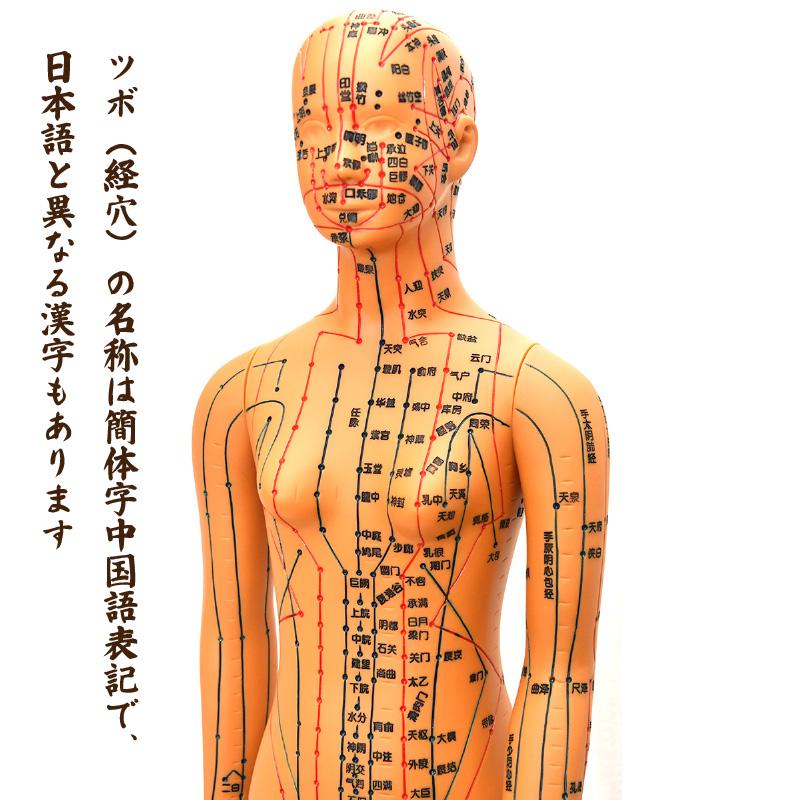 経絡・経穴(ツボ)人形 中国語