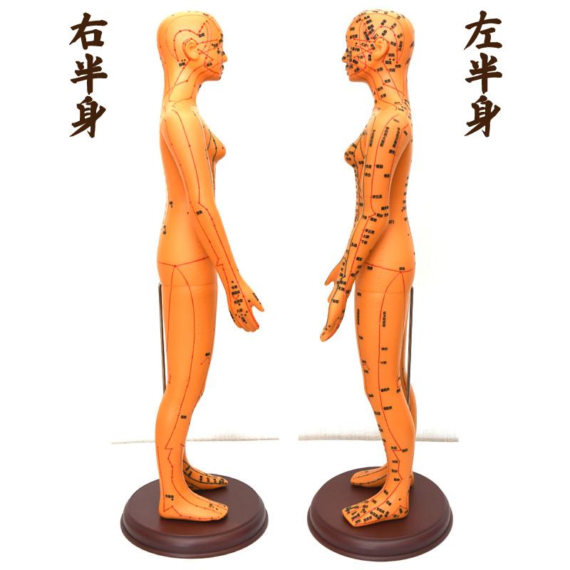 経絡・経穴(ツボ)人形 横からの写真